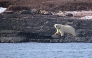 ijsbeer 6